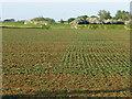 TL5173 : Arable crops, Starlock Hay Fen Common by Christine Johnstone