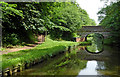SJ8612 : Shropshire Union Canal near Wheaton Aston in Staffordshire by Roger  Kidd