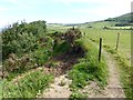 NZ9503 : Path diversion on the Cleveland Way by Oliver Dixon