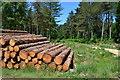 SU2704 : Log stack in Poundhill Inclosure by David Martin