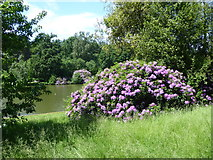 TL8425 : Looking to the lake at Marks Hall Park by Marathon