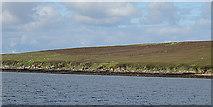 ND3195 : Coast of Fara by Anne Burgess