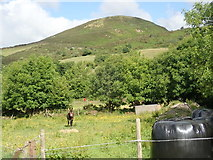 J0125 : A vocal donkey in the shadow of the Sugar Loaf Hill by Eric Jones