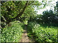 TL5174 : Public footpath to Middle Common Drove by Christine Johnstone