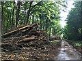 SK6477 : Log pile In Apleyhead Wood by David Lally