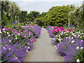 S5310 : Scented Path, Mount Congreve Gardens by David Dixon