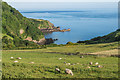SS6949 : Sheep above Lee Bay by Ian Capper