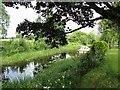 N0341 : Athlone-Old Canal Arm by Ian Rob