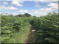 SJ8151 : Unofficial path through the bracken by Jonathan Hutchins
