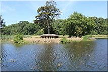 NS2209 : Island, Swan Pond by Billy McCrorie