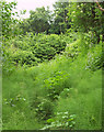 ST1574 : Leckwith Woods by Derek Harper
