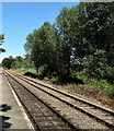 TQ8628 : Tracks at Wittersham Road Railway Station by PAUL FARMER