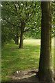 SE3054 : Trees on The Stray by Derek Harper