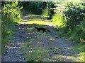 NM6943 : Pinemarten crossing the track to Ardtornish Bay by John Ferguson