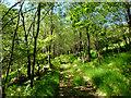 NM8564 : Birch woodland below Ceann a' Chreagain by John Allan