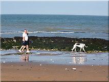TR4068 : Dog walker on Stone Bay by David Howard