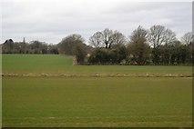 TR0344 : Corner of hedge by N Chadwick