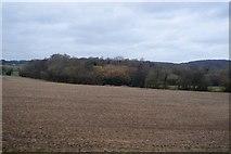 TR0447 : Gottye Wood by N Chadwick