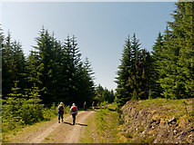 NH7077 : Walking on a Forest Road in the Morangie Forest by Julian Paren