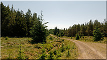 NH6977 : Forestry Road in Morangie Forest by Julian Paren