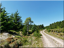 NH6878 : Morangie Forest road above Strath Rory by Julian Paren