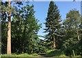 TQ4130 : Tall Trees : Week 27
