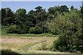 TQ3834 : Field Near Stone Hill by Peter Trimming