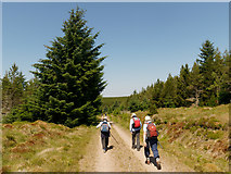 NH6978 : Walking the Morangie Forest road towards Cnoc an t-Sabhail by Julian Paren