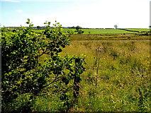 H3990 : Rough ground, Drumnahoe by Kenneth  Allen
