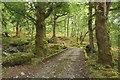 NN2780 : Bridge crossing the Allt Beinn Chlianaig by Graham Robson