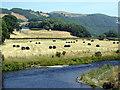 SN6879 : Afon Rheidol and Tycam Farm : Week 27