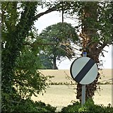 SK5451 : Oak tree and national speed limit sign by David Lally