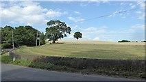 SK5451 : Grass field beside Blidworth Waye by David Lally