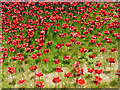 NY3956 : 'Weeping Window' poppy sculpture, Carlisle Castle (3) by Rose and Trev Clough
