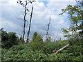 S6713 : Dense Undergrowth by kevin higgins