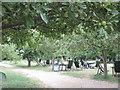 TL4355 : The Orchard Tea Garden, Grantchester by M J Richardson