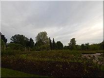TQ2882 : Rose Garden in Regent's Park by Hamish Griffin
