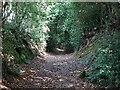 SK3544 : Dark Lane by Ian Calderwood