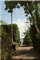 SX8962 : Cockington Lane, Preston by Derek Harper
