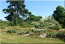SK4924 : The Rose Garden, Whatton House Gardens by Alan Murray-Rust