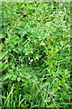 ST1474 : Overgrown path, Brynwell by Derek Harper