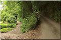 SX8153 : Track and lane near Allaleigh by Derek Harper