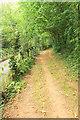 SX8963 : Path, Manscombe Plantation by Derek Harper