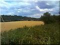 SO8694 : Wheat Field by Gordon Griffiths