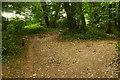 SX8963 : Woodland walk, Manscombe Plantation by Derek Harper