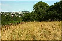 SX8963 : Meadow above Cockington valley by Derek Harper