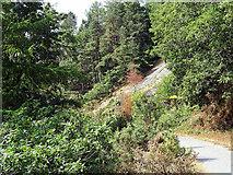 SN7079 : Forest Road in Coed Dol-fawr by John Lucas