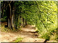 ST4193 : Beech-lined forest track by Jonathan Billinger