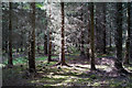 NH5242 : Black Wood, Belladrum by Julian Paren