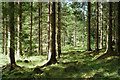 NH5242 : Black Wood, Belladrum : Week 30